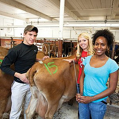 Dairy Science Student with Jersey cattle