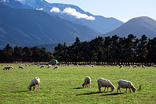 A photo of New Zealand Agriculture Landscape